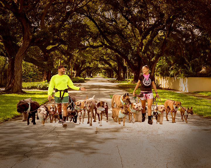 Dog walkers along oak tree overlapped lane in Miami, Florida.